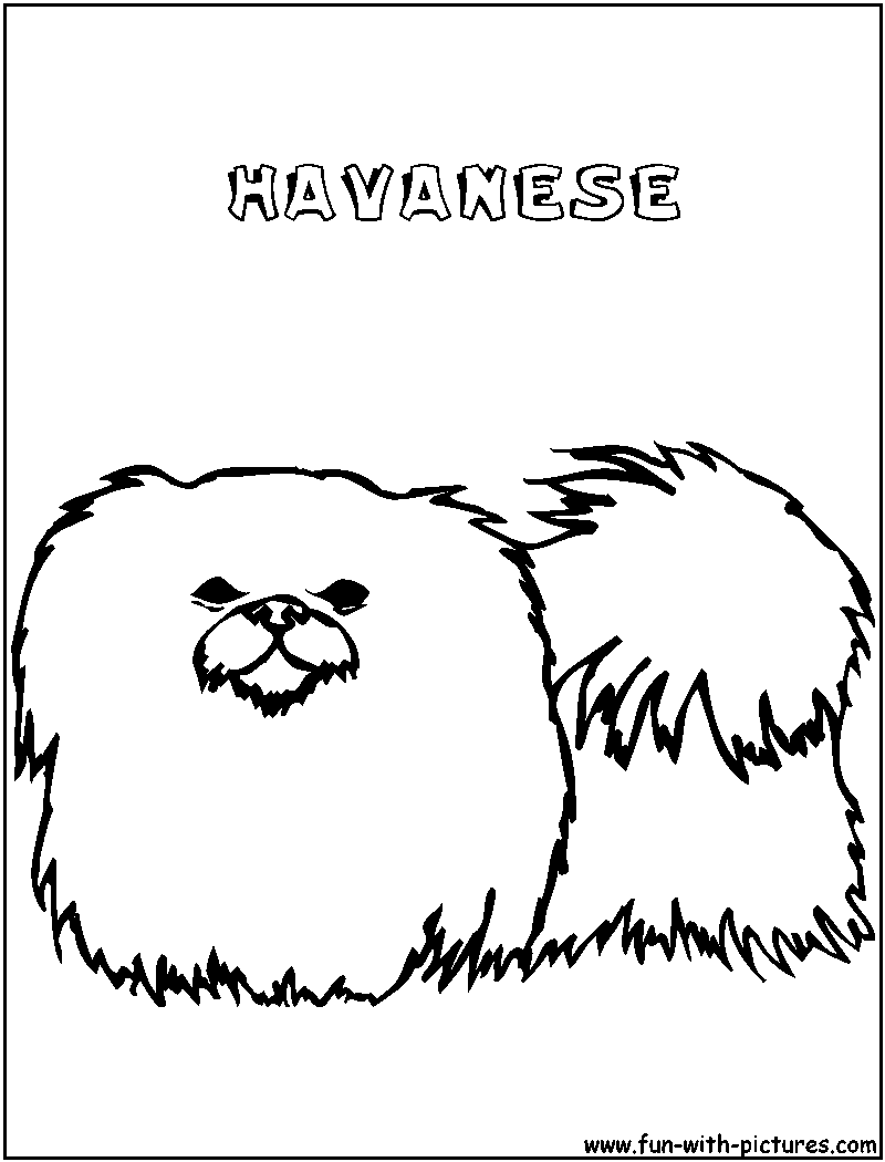 Elegant Havanese Dogs AOL Image Search Results. Havanese Animal Coloring Pages.