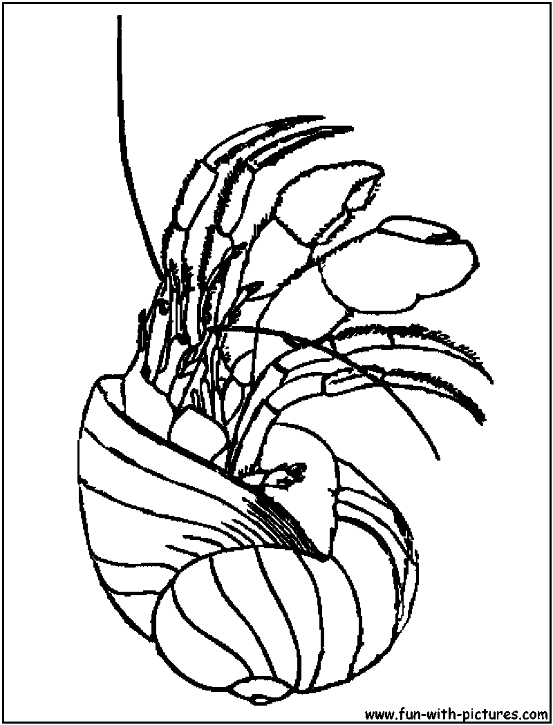 Pet Hermit Crab Coloring Pages