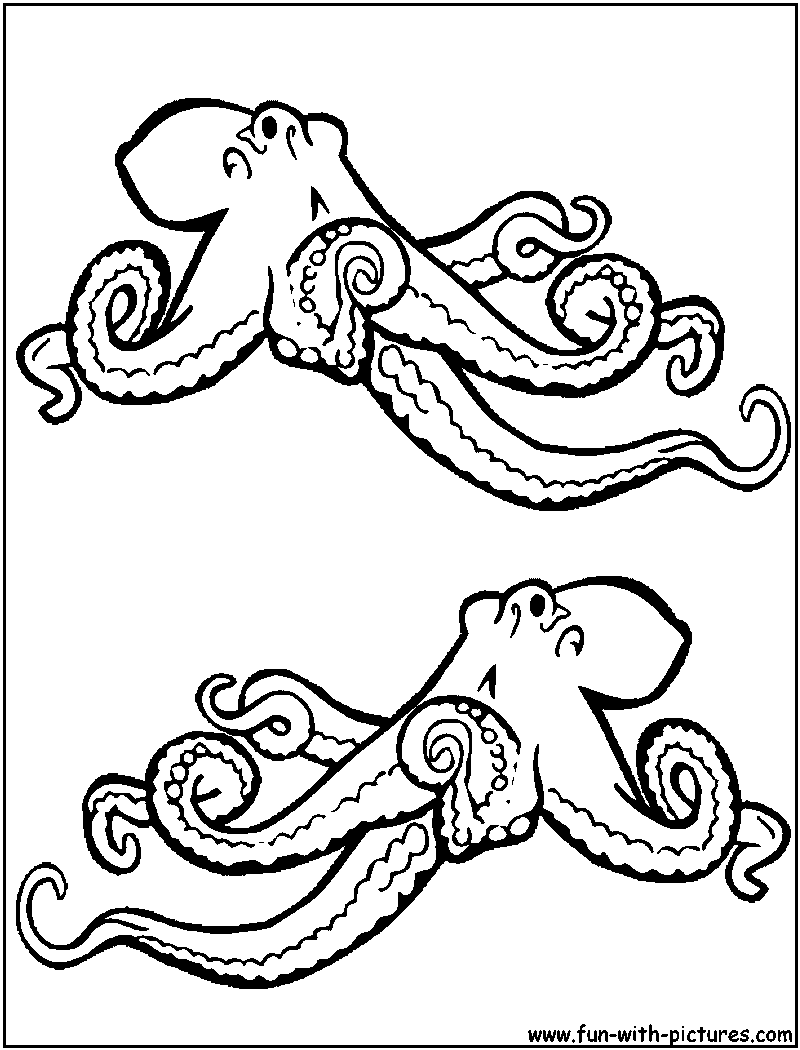 Realistic octopus coloring page for Realistic octopus coloring page