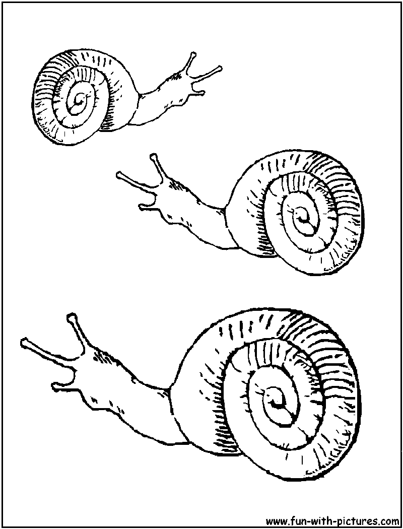 Sea snail coloring page of sea snail
