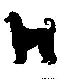 afghanhound silhouette