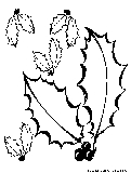 Autumn Leaves Coloring Page4
